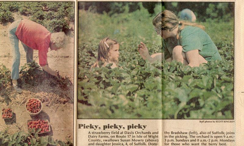 dottie-bradshaw-picking-strawberries-img678