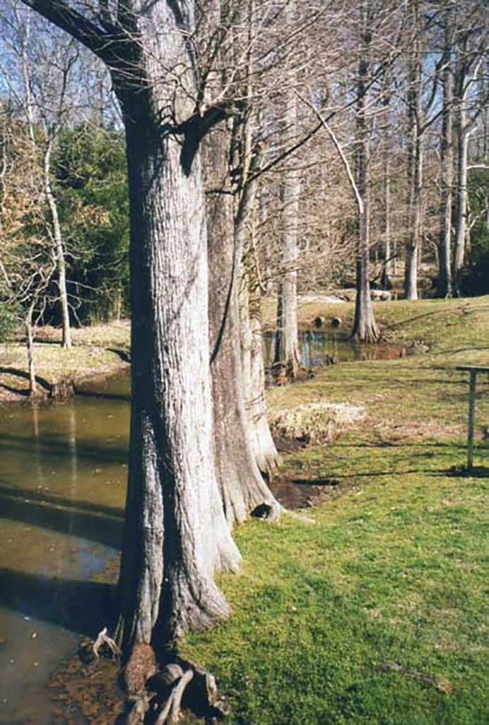 creek-just-below-grist-mill-2000-img316