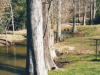 creek-just-below-grist-mill-2000-img316