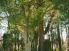 pitt-cemetary-off-cherry-grove-road-img310